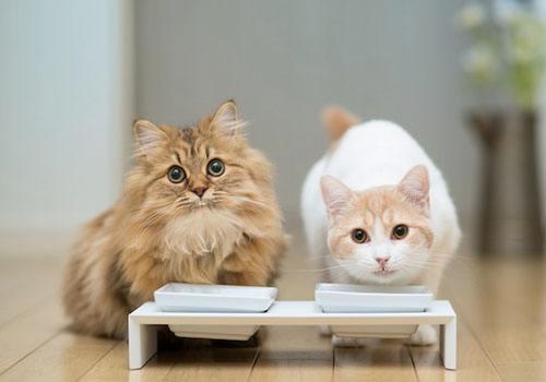 成年猫一天吃多少猫粮 猫粮喂养指南