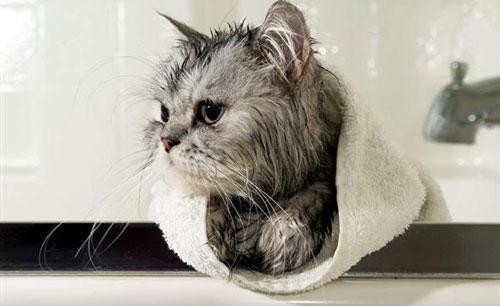 猫咪美容工具有哪些 猫咪美容工具使用方法