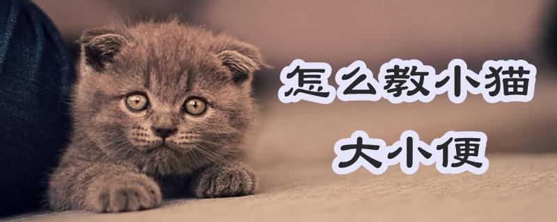 怎么教小猫大小便