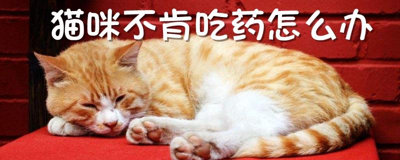 猫咪不肯吃药怎么办