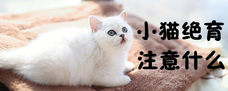 小猫绝育注意什么