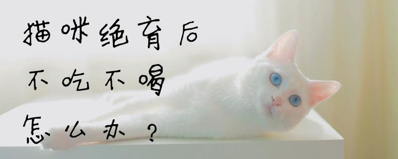 猫咪绝育后不吃不喝怎么办