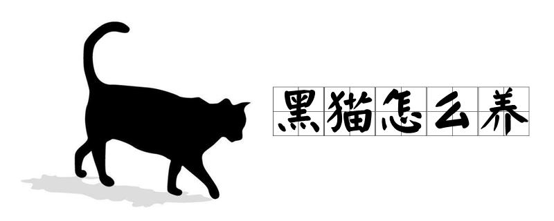 黑猫怎么养