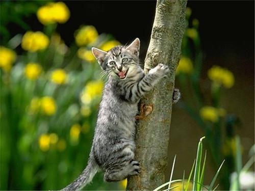 猫咪口腔溃烂怎么办 猫咪口腔溃烂原因介绍