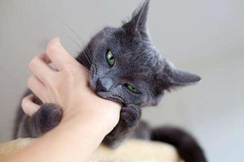 被猫咬伤了怎么办 猫咪咬伤处理方法