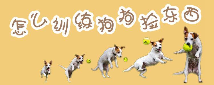 怎么训练狗狗捡东西