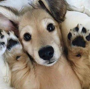 狗狗趾间炎怎么治疗