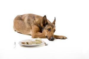 小狗呕吐有哪些原因