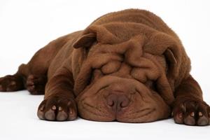 小狗狗生产注意些什么