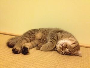 猫咪肾衰有什么症状