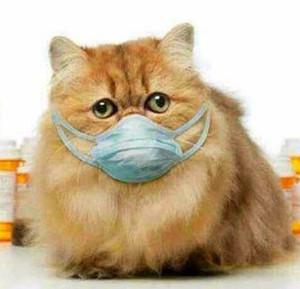 猫狂犬病症状