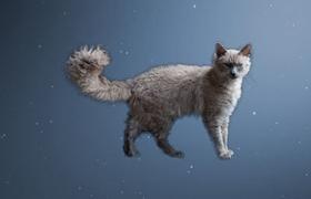拉邦猫长猫癣怎么办 猫癣治疗方法介绍