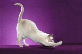 东奇尼猫感冒怎么治疗 东奇尼猫感冒治疗方法