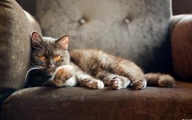 美国短毛猫流口水怎么办 美短流口水解决办法