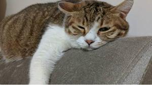 猫咪血型有哪些 猫咪血型介绍