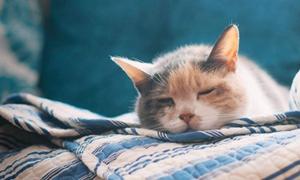 猫鼻支和猫感冒怎么区分 二者区分技巧