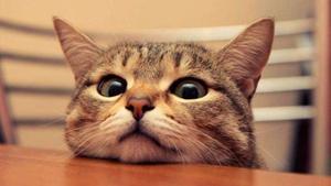 猫眼睛睁不开怎么办 猫眼睛睁不开原因