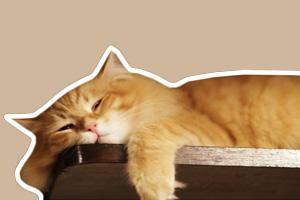 猫咪肾衰的症状有哪些