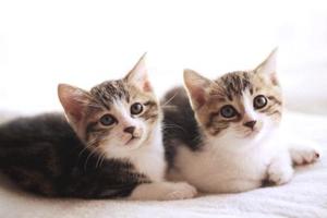 怎么能缓解小猫发情