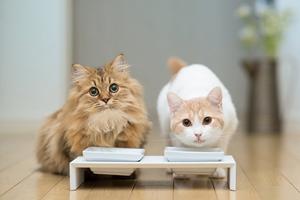 猫咪奶水不够怎么办