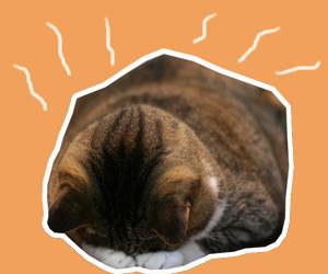 猫中暑了怎么办