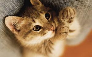 被猫抓伤怎么办