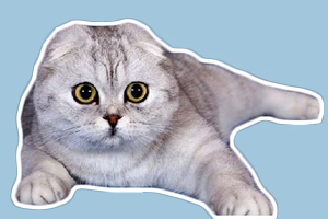 折耳猫遗传病症状有哪些