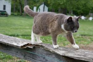 小猫初到新家该怎么办